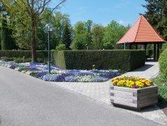 Hecken können als vertikale Sedimentationsflächen für Pollen eingesetzt werden., © Kur- und GästeService Bad Füssing KdöR